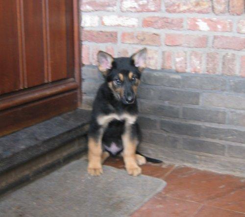 puppy_2.jpg