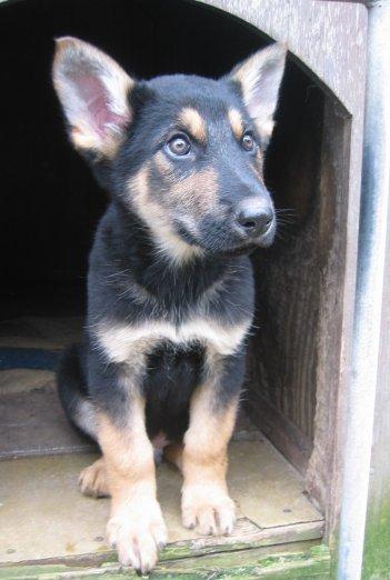 puppy_3.jpg
